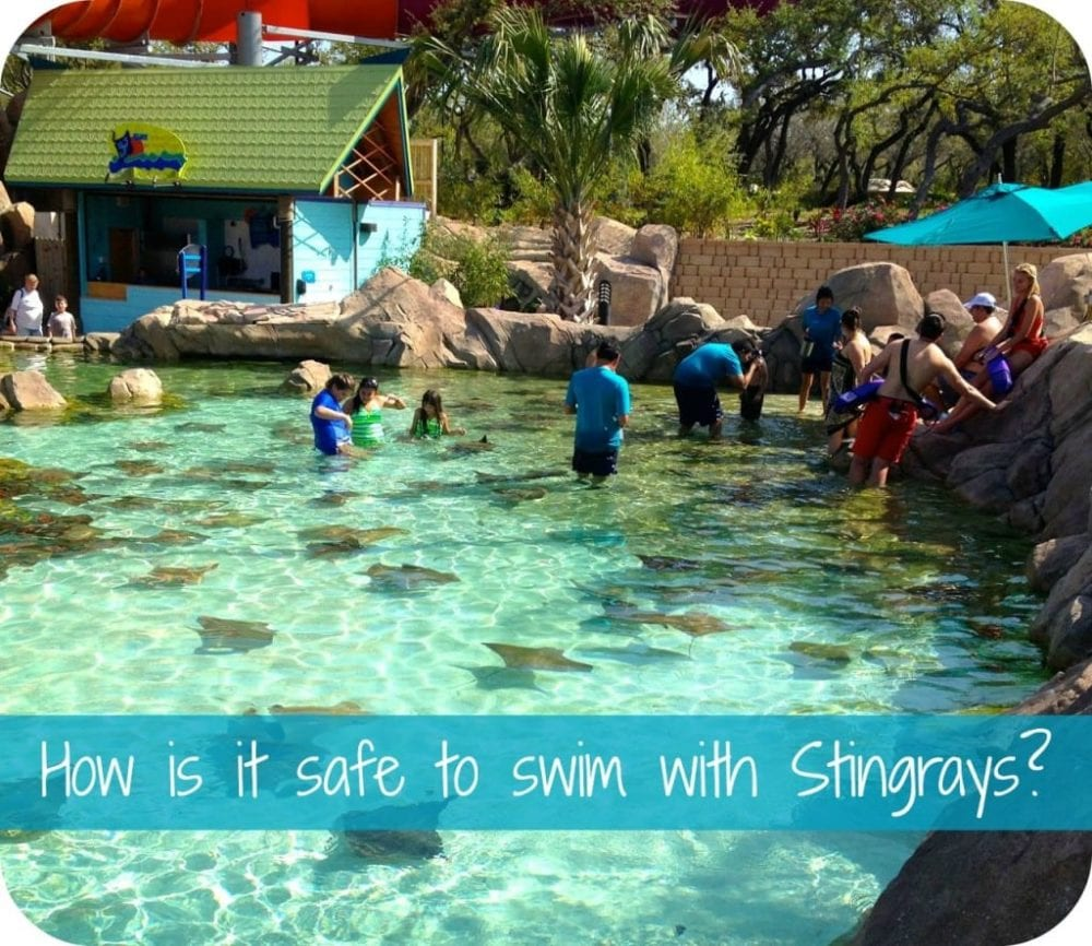 stingray safety at Aquatica in Texas