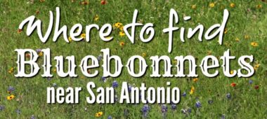 Where to Find Bluebonnets in San Antonio