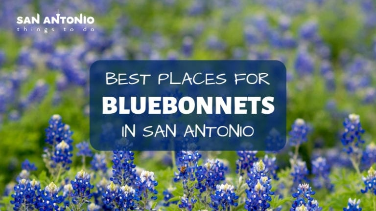 bluebonnets in san antonio