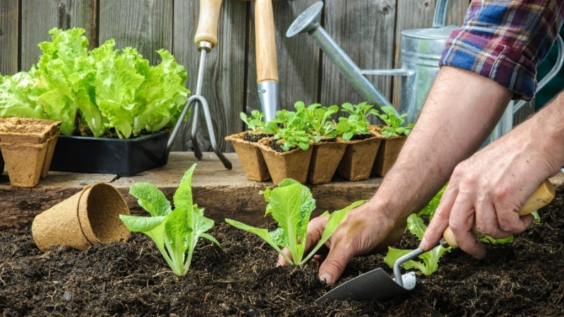 What Vegetables Can You Grow in September in San Antonio?
